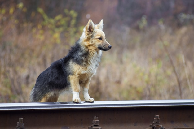 Verdwaalde hond dichtbij een spoorwegspoor