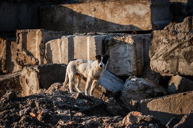 Verdwaalde hond onder betonplaten