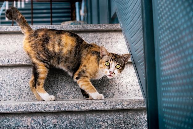 Verdwaalde kat in de stad. bruine gestreepte kat