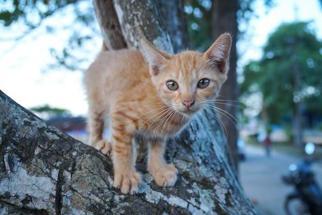 Verdwaalde kat op de boom