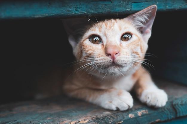 Verdwaalde kitten, kat in de stad