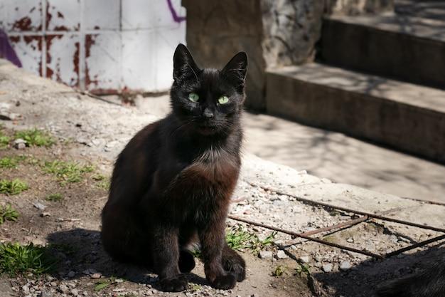 Verdwaalde zwarte kat zit in de achtertuin. mystieke zwarte kat met groene ogen. diepbruine straatkat op een verlaten plaats.