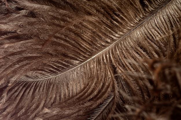 Veren in macro. de bruine struisvogelveren in het zonlicht sluiten omhoog.