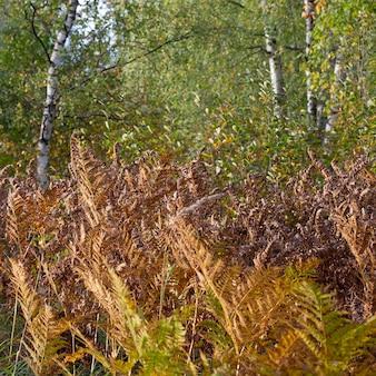 Vergeeld varenblad op een onscherpe achtergrond. droog varenblad in het bos. herfst tropische achtergrond.