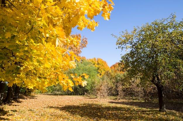 Vergeelde bomen met afgevallen bladeren en ligt aan de kruinen van bomen in het herfstpark