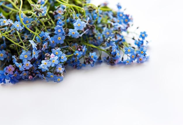 Vergeet-mij-nietjebloemen die op witte achtergrond worden geïsoleerd