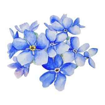 Vergeet-mij-nietjes zijn blauw. botanische aquarel illustratie