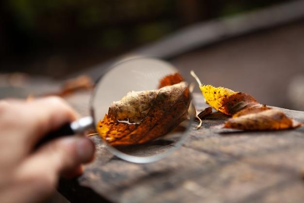 Vergrootglas kijkt naar herfstbladeren