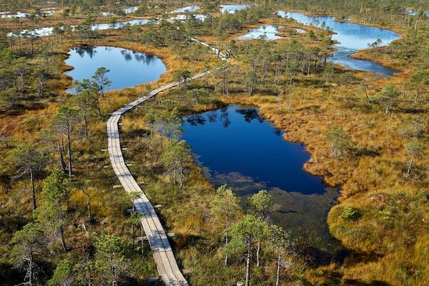 Verhoogde moeraspromenade. kemeri nationaal park in letland. zomer.