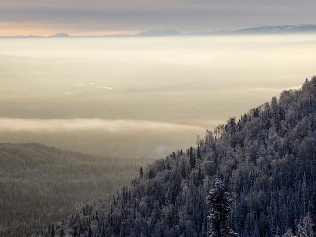 Verhoogde weergave van bomen, alaska highway, northern rockies regional municipality, british columbia, ca