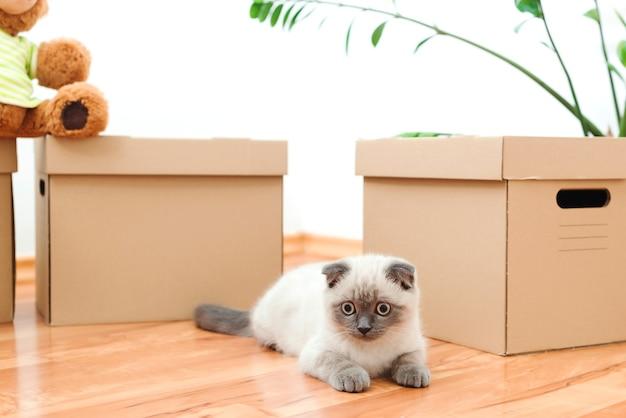 Verhuisdag kat, zittend op de dozen in een nieuw huis