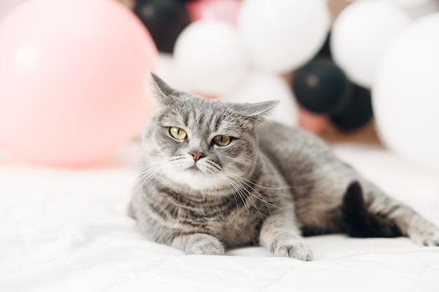 Verjaardag kat. mooie stijlvolle foto. witte achtergrond.
