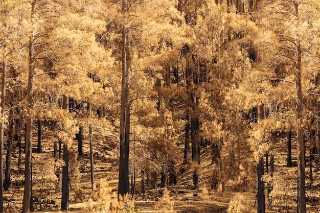 Verkoold en zwartgeblakerd bos na een brand in turkije.