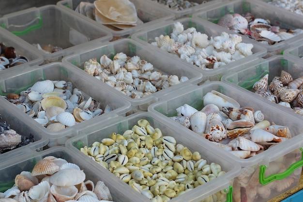 Verkoop van verschillende schelpen aan de kust van de zwarte zee. Premium Foto