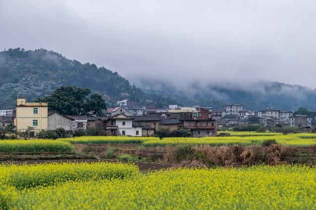 Verkrachtingsbloemen in de regen zijn op het platteland en er is mist in de verre bergen