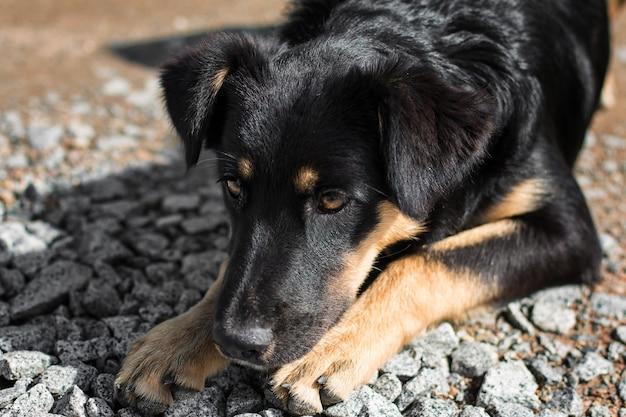 Verlaten dakloze zwerfhond op straat trieste eenzame hond op de lokale weg