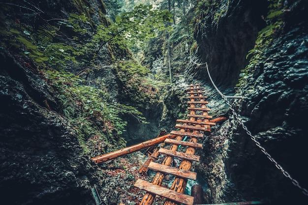 Verlaten oude houten brug in jungle bos.