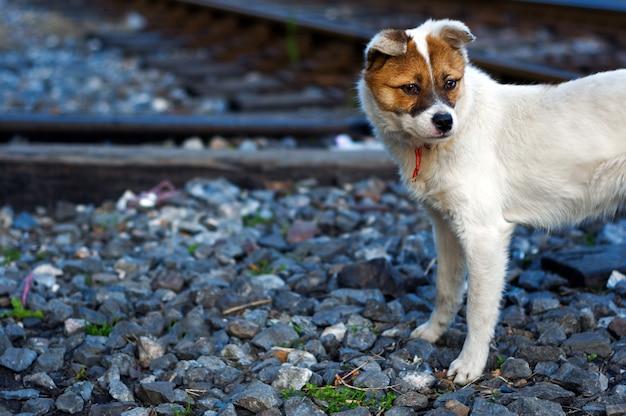 Verlaten puppy