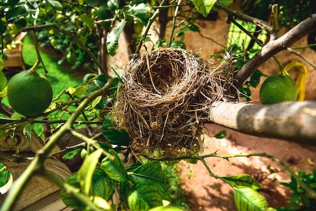 Verlaten vogelnest, gebouwd met rietjes.
