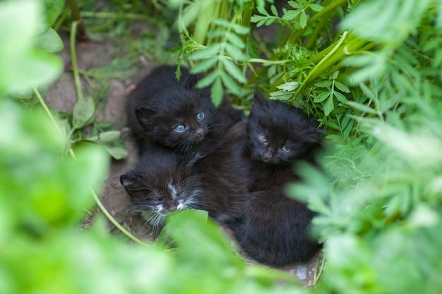 Verlaten zwarte kittens, kittens wachten op moeder, helpen dakloze dieren