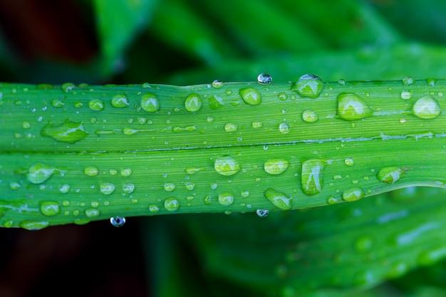 Verlof en waterdruppels detail