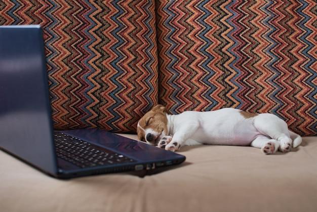Vermoeide slaap jack russel-terriërhond dichtbij laptop op bank.