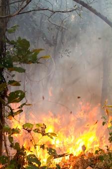 Vernietigd door brandend tropisch bos, thailandt