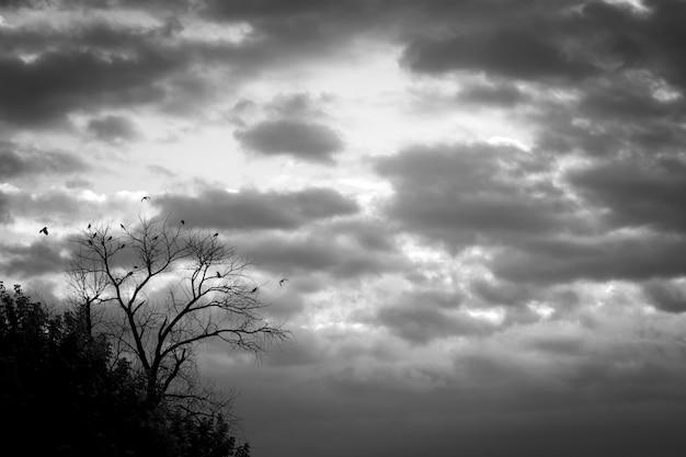 Vernietigde boom met vogels op bewolkte dag