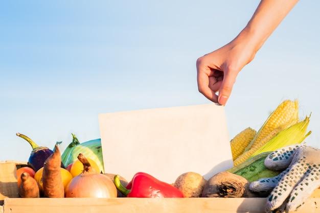 Verpakkingsdoos vol natuurlijke biologische groenten. vrouw hand met leeg teken op stapel van verse groenten op landbouwgebied.