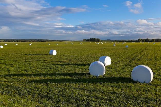 Verpakt gras - het gras verpakt in balen voor het voederen van dieren in een winterseizoen
