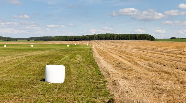 Verpakt in witte cellofaanrollen geoogst droog hooi voor het voederen van boerderijdieren in de winter, landschap