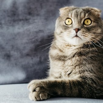 Verraste vouw kat op sofa