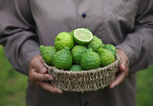 Vers bergamotfruit in een mand die door vrouwenhand wordt gehouden