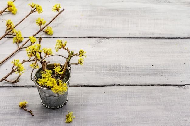 Vers bloeiende takjes kornoelje in tinnen emmer. lente stemming concept, kaartsjabloon, behang, achtergrond. houten planken achtergrond