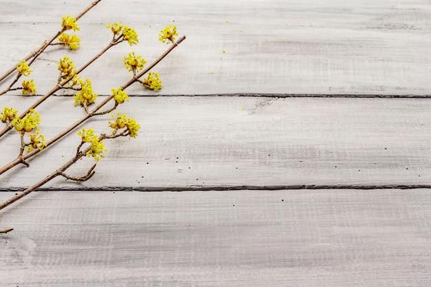 Vers bloeiende takjes kornoelje op houten planken achtergrond. lente stemming concept, kaartsjabloon, behang, achtergrond