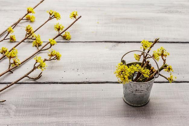 Vers bloeiende takjes kornoelje op houten planken achtergrond. springtime mood concept, tin bucket, card template, wallpaper, backdrop