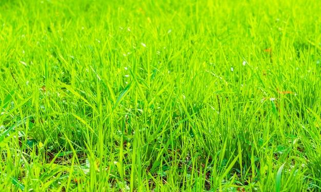 Vers de lente groen gras