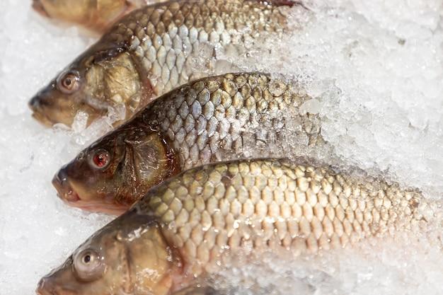 Vers gekoelde karpers op de vismarkt of supermarkt.