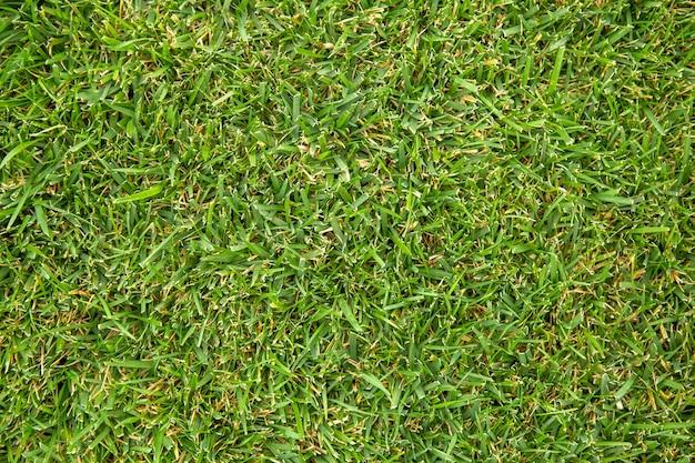 Vers gemaaid gras. natuur textuur achtergrond. groen gras gazon op het veld. groen gazonpatroon.