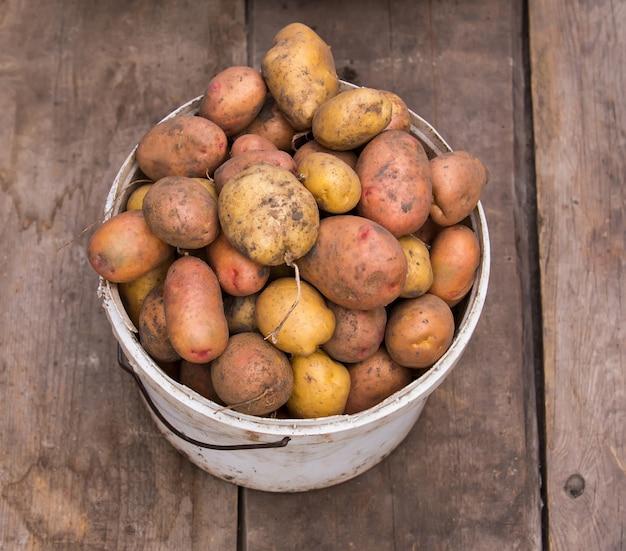 Vers geoogste aardappelen in emmer op een ruwe houten palet. Premium Foto