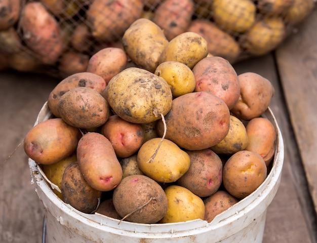 Vers geoogste aardappelen in emmer op een ruwe houten palet.