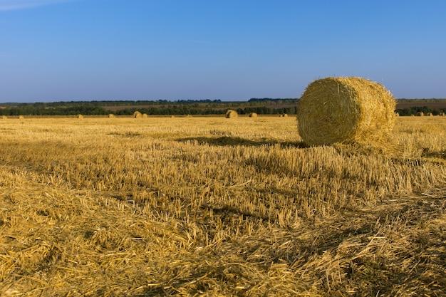 Vers geoogste ronde hooibalen staan tussen de vers gemaaid stoppels van het gras op een landbouwveld onder een zonnige blauwe zomerhemel