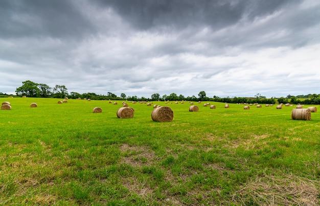 Vers gerolde strobalen in het groene veld met dramatische lage lucht.