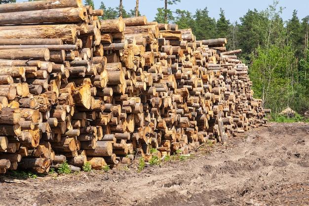 Vers gesneden boom houten logboeken opgestapeld op de grond