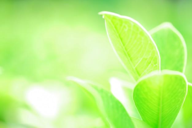Vers groen blad op groene aard vage achtergrond