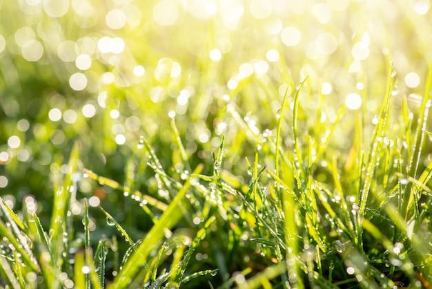 Vers groen gras in ochtenddauw. felle zonnestralen op de achtergrond