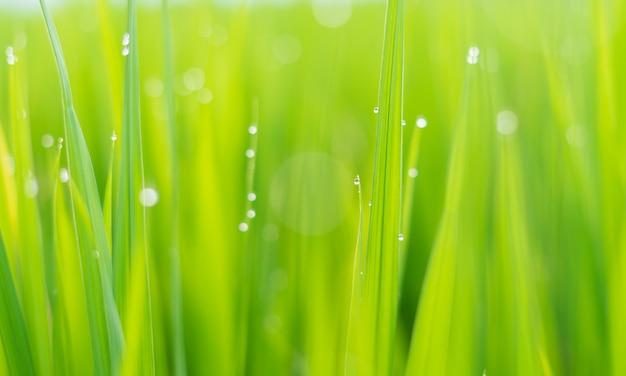 Vers groen gras met dauwdruppels in de zon op auttum abstracte wazige achtergrond