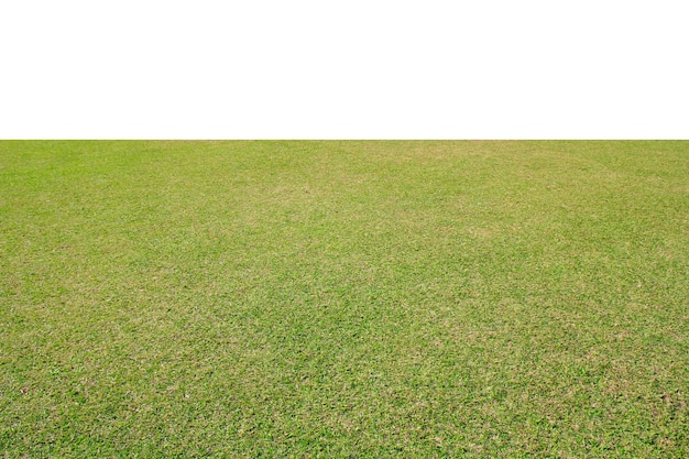 Vers groen grasgazon dat op witte achtergrond wordt geïsoleerd