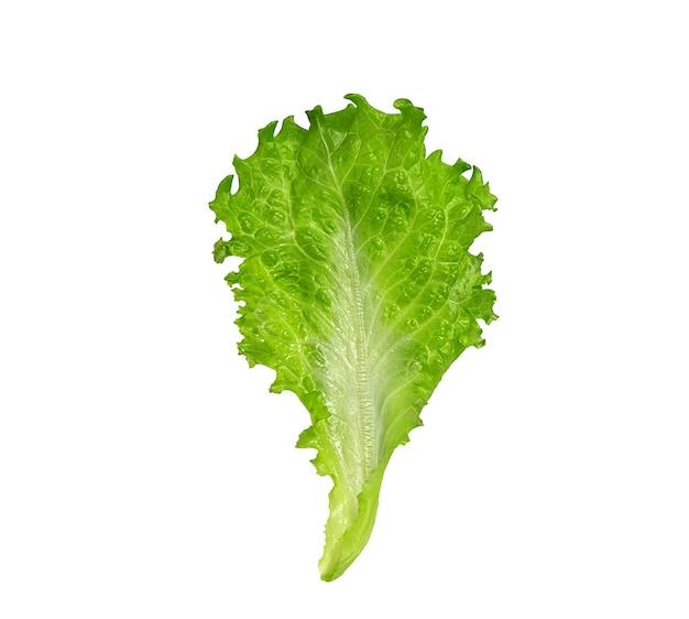 Vers groen saladeblad op wit