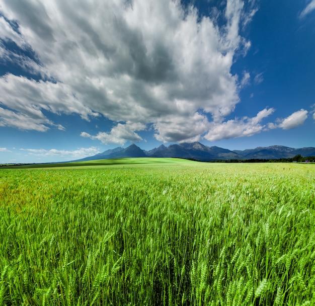 Vers groen tarwegebied onder toneel dramatische hemel